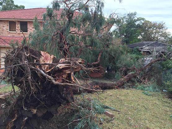 Emergency Tree Removal Services Sydney