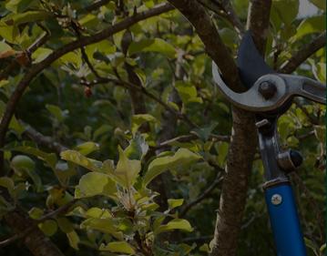 Tree Maintenance Sydney